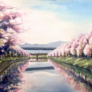 2021.03 池田川の桜並木(糸島市)