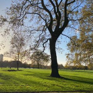 【ロンドン】Hyde Park(ハイドパーク)おしゃれエリアの近くにある, 自然豊かで広大な公園