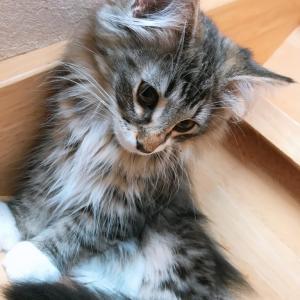子猫の一日の行動とお世話について
