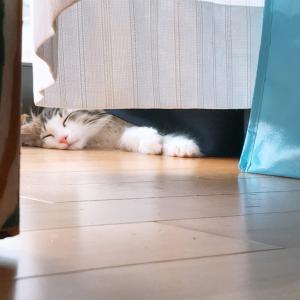 用意したベッドで子猫が寝てくれなかったお話