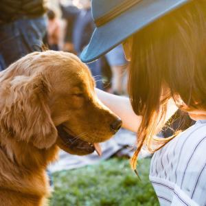 パブロフの犬とは何?条件反射を使って60秒で仕事や人間関係を円滑にできる秘訣を公開