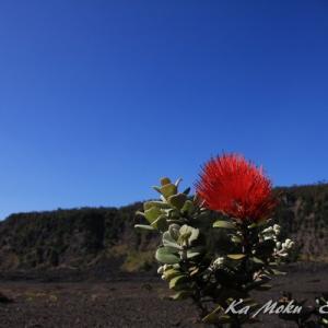 ハワイ島フォト日記 火口の底を歩いてみよう!