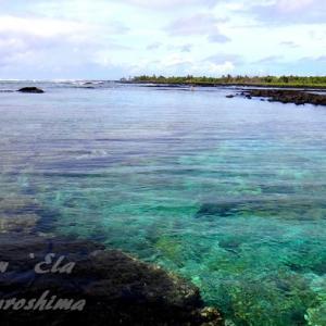 ハワイ島フォト日記 思い出のWaiOpae 残念でたまりませぬ!