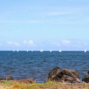 ハワイ島フォト日記 のどかなヒロベイのこんな光景はいかがかな?