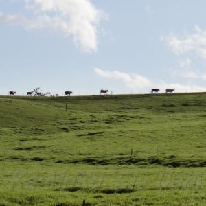 ハワイ島フォト日記 ハワイ島東海岸の19号線沿いをハマクアコーストと呼ぶ