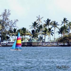 ハワイ島フォト日記 海は眺めてるだけで気分がいいね!