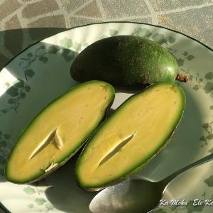 ハワイ島フォト日記 ねえ!このフルーツを知ってるかい?