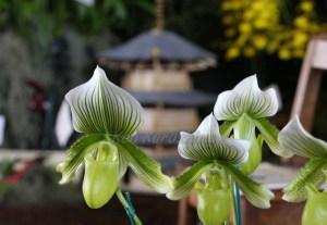 ハワイ島フォト日記 ハワイ産の美しい蘭の花をもう少しご紹介!