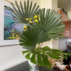 ハワイ島フォト日記 親友KTのおしゃれな生け花だぞ!