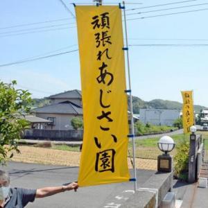 高知市でコロナクラスター発生の「あじさい園」に黄色い応援旗!ネットの反応を調べました。