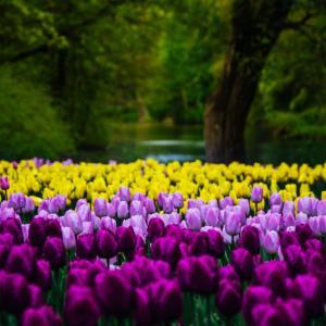 「人の行く裏に道あり花の山」は人生にも通じる格言 優れるよりも異なることで周りと差別化しよう