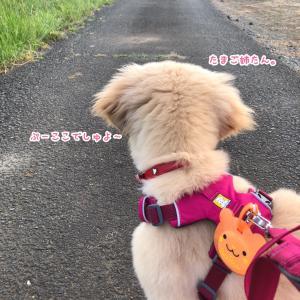華麗なるお散歩デビュー。