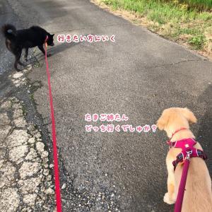 ショート散歩