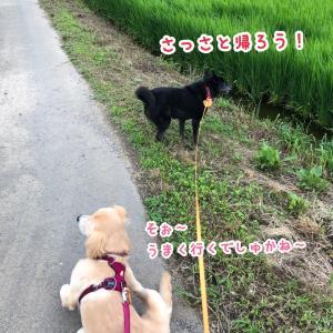 散歩NO党