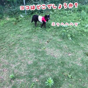 ドックランand夕散歩(キン肉マン風)