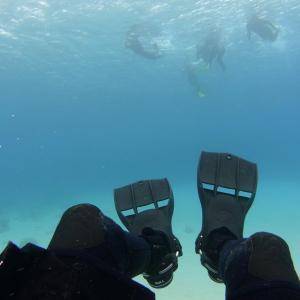 ダイビングのフィン|短いタイプは使いやすくておすすめ