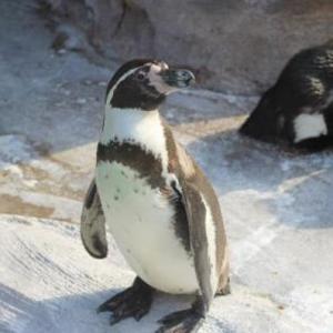 Hilton Hawaiian Villageのペンギン