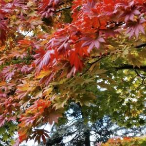 秋のボタニカルガーデン