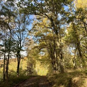 針葉樹の森の秋