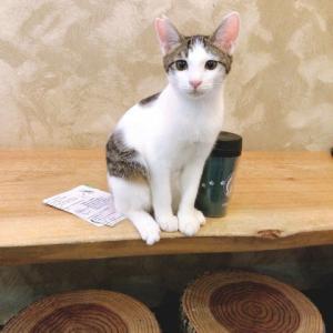 ♪人生初体験!猫カフェに行ってきた♪