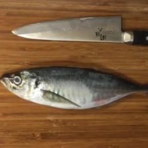 魚の豆知識