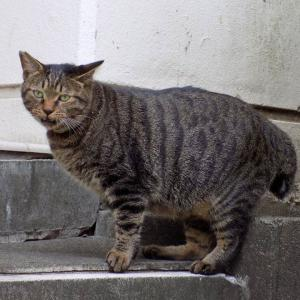 第152匹 東京で出会った猫