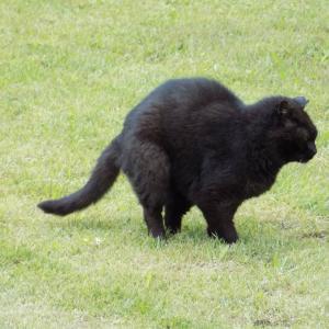 第153匹 東京で出会った猫