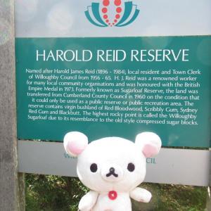 シドニー ハロルド・リード保護区の散歩