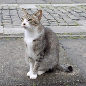 第167匹 台湾の猫の村(猴硐)で出会った猫