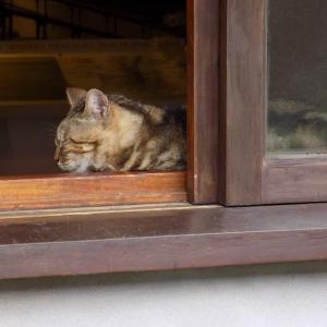 第168匹 台湾の猫の村(猴硐)で出会った猫