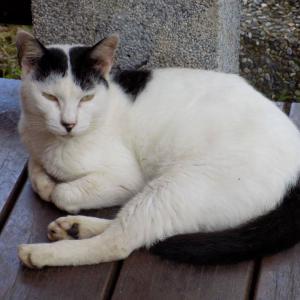 第170匹 台湾の猫の村(猴硐)で出会った猫