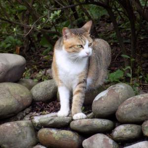 第171匹 台湾の猫の村(猴硐)で出会った猫