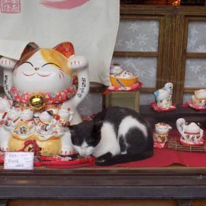 第172匹 台湾の猫の村(猴硐)で出会った猫