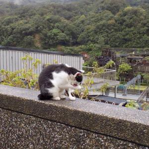 第173匹 台湾の猫の村(猴硐)で出会った猫