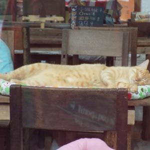 第175匹 台湾の猫の村(猴硐)で出会った猫