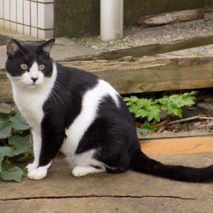第182匹 城ヶ島で出会った猫