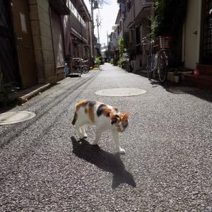 第185匹 東京で出会った猫
