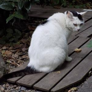 第186匹 東京で出会った猫