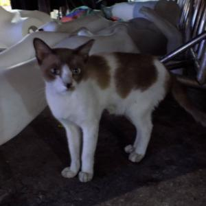 第187匹 タイで出会った猫