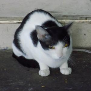 第188匹 タイで出会った猫