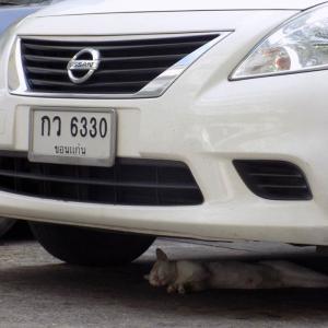 第189匹 タイで出会った猫