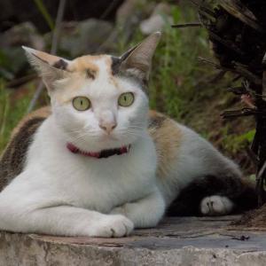 第191匹 タイで出会った猫