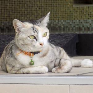 第192匹 タイで出会った猫
