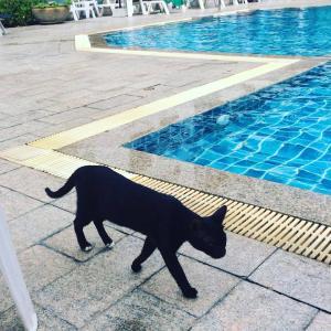 第194匹 タイで出会った猫