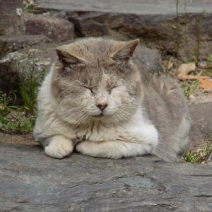 第197匹 豊田で出会った猫