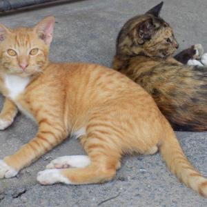 第208匹 チェンマイで出会った猫