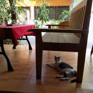 第210匹 チェンマイで出会った猫