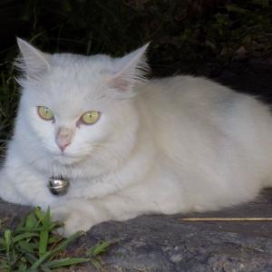 第212匹 チェンマイで出会った猫