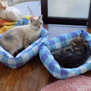 第228匹 沖縄で出会った猫