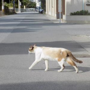 第219匹 沖縄で出会った猫